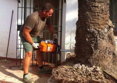 personal cualificado en trabajos de jardinería poda tallo de árboles