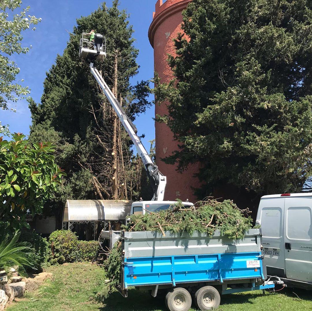 poda y tala de árboles en Tarragona