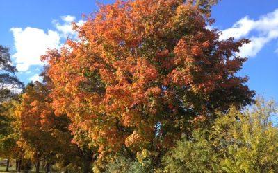Cuidados básicos de los árboles durante el otoño